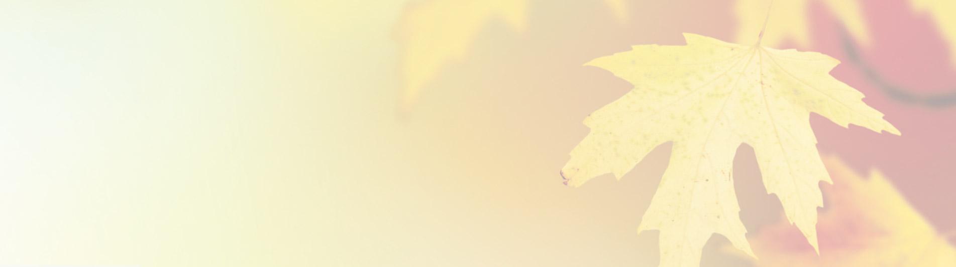 fall-slider